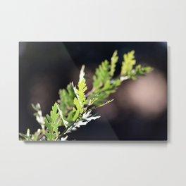 Oak Branch Metal Print
