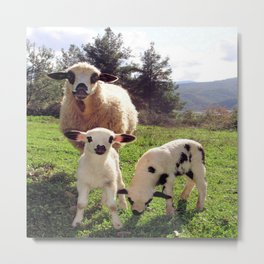Two Ewes and Three Lambs Grazing Metal Print