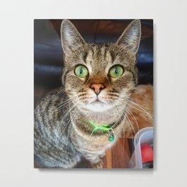 Green Eyed Meow Metal Print
