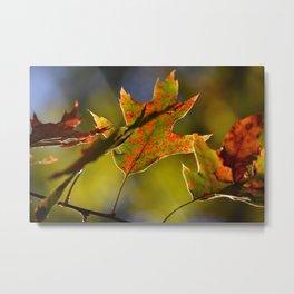 Itasca's Leaves Metal Print