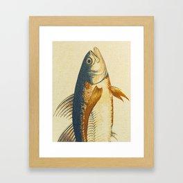 Piscibus 8 Framed Art Print