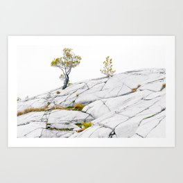 The Canadian Shield Art Print