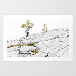The Canadian Shield Art Print