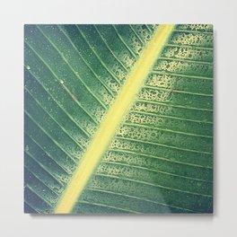banana leaf after the rain Metal Print