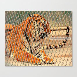 Snarling Tiger @ Local Zoo Canvas Print