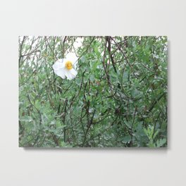lonely flower Metal Print
