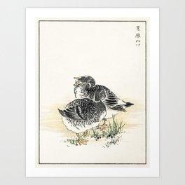 Black Brant illustration from Pictorial Monograph of Birds (1885) by Numata Kashu (1838-1901) Art Print