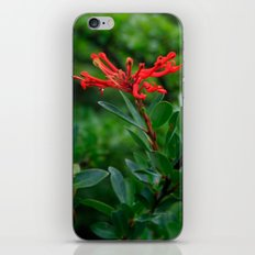 Notro flower in cucao chiloe iPhone & iPod Skin