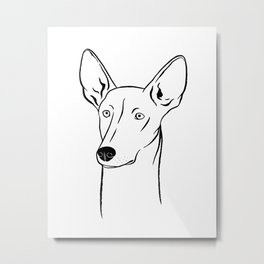 Ibizan Hound (Black and White) Metal Print
