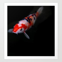 koi fish Kyoto Japan Art Print