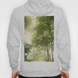 Towering Maple Tree Hoody