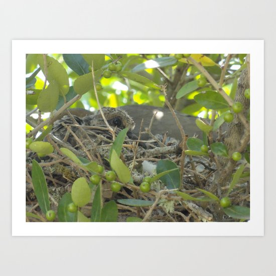 Dove Nest Art Print
