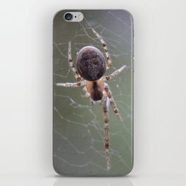 Spider on Orb Web iPhone Skin