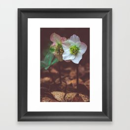 Out of the Gloom Framed Art Print