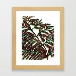 Fern Fronds III Framed Art Print