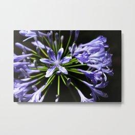 Purple Perennials Metal Print