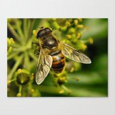 Bee? Canvas Print