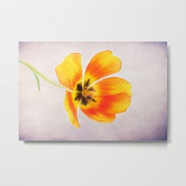 Beautiful Tulip Metal Print