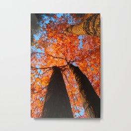 Flaming trees Metal Print