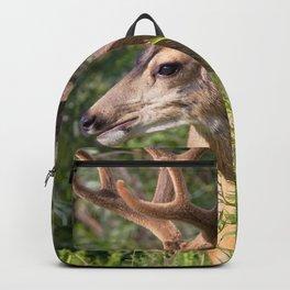 Watercolor Deer, Mule 19, Estes Park, Colorado, Velvet Splendor Backpack