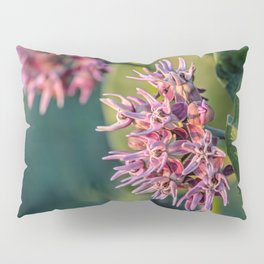 Showy Milkweed Pillow Sham