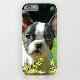 French bulldog puppy behind the foliage iPhone Case