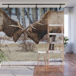 ELK IN RUT COLORADO ROCKY MOUNTAIN NATIONAL PARK WILDLIFE NATURE PHOTOGRAPHY Wall Mural