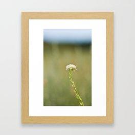 Flower in the Field Framed Art Print