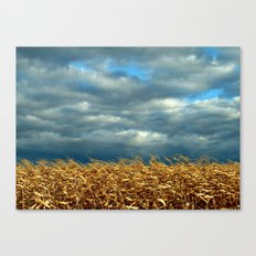 'CORN FIELD' Canvas Print