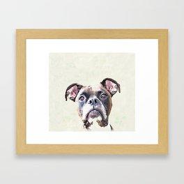 Brindle Boxer Dog Framed Art Print
