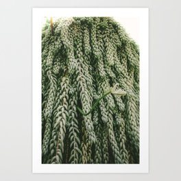 Donkey's Tail Art Print