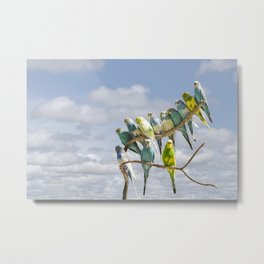 Parakeets perched on a limb Metal Print
