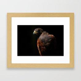 Hawk Out Of The Shadows | Harris Hawk | Wildife Photography Framed Art Print