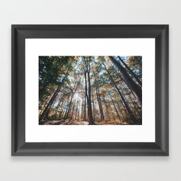 into the woods 06 Framed Art Print