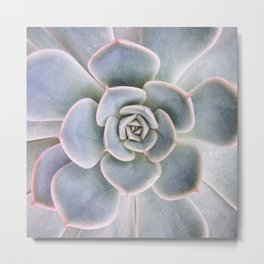 Nature Photography | Cactus Art | Pink and Blue Succulent | Plant | Botanical Metal Print