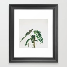 Elephant Ear Framed Art Print