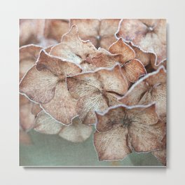 Frosty Hydrangea Metal Print