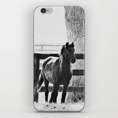 horse by the fence iPhone & iPod Skin