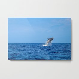 Humpback Breach 14 Metal Print