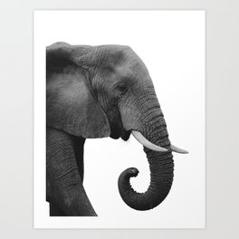African Elephant in the Room | Black and White Photography | Wildlife Photography Art Print