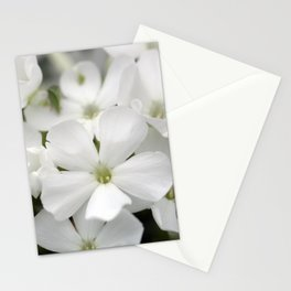White Phlox Stationery Cards