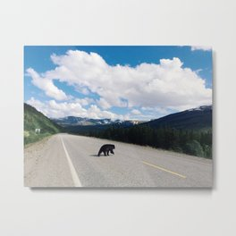 Black Bear Crossing Metal Print