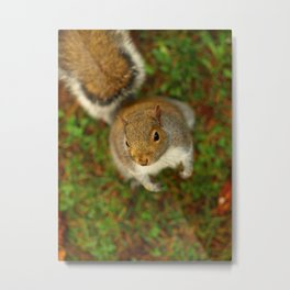 Squirrel In The Forest... Metal Print