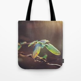 Holding On: A Winter Leaf Tote Bag