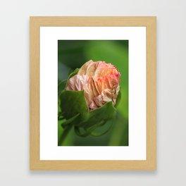 Hibiskus Bud Framed Art Print