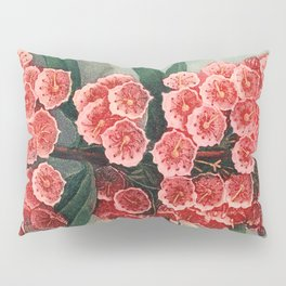 Pink Floral The Narrow-leaved Kalmia : Temple of Flora Pillow Sham