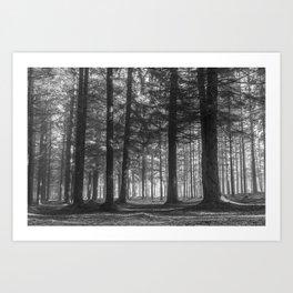 Black and white woods - North Kessock, Highlands, Scotland Art Print