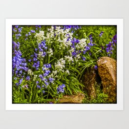 Blue and White Bells Art Print