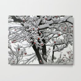 Tree covered with snow but still has red fruits remaining Metal Print