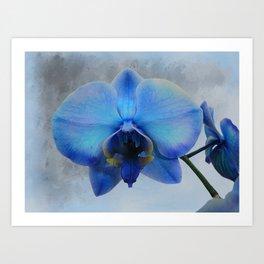 Blue Orchid Flower Art Modern Cottage Chic Home Decor Art A461 Art Print